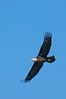 AmericanBaldEagle-LakeCoFl-1-2-17-SJS-026