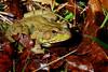 Bullfrog-07-05