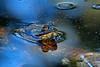 BullFrog-CorkscrewSwampNaplesFL-11-18-17-SJS-001