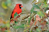Cardinal-LakeYaleEstates-2-28-17-SJS-001