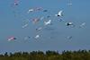 IbisSpoonbill&Egrets-MerrittIslandNWRFL-12-10-17-SJS-003
