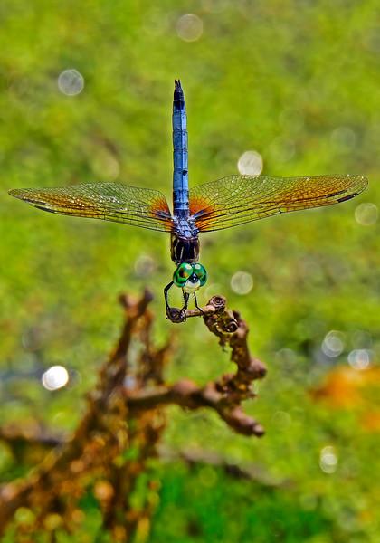 BlueDasher-2014-sjs-006