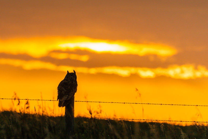 Owl and the Sunset