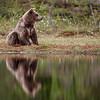 Wetland bear
