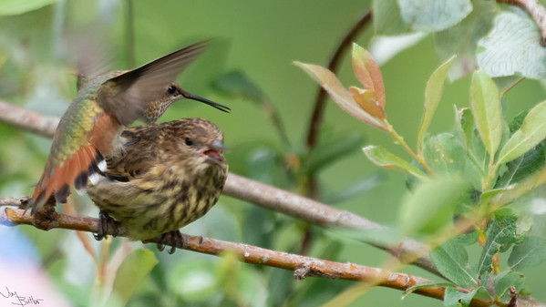 Nasty Bird