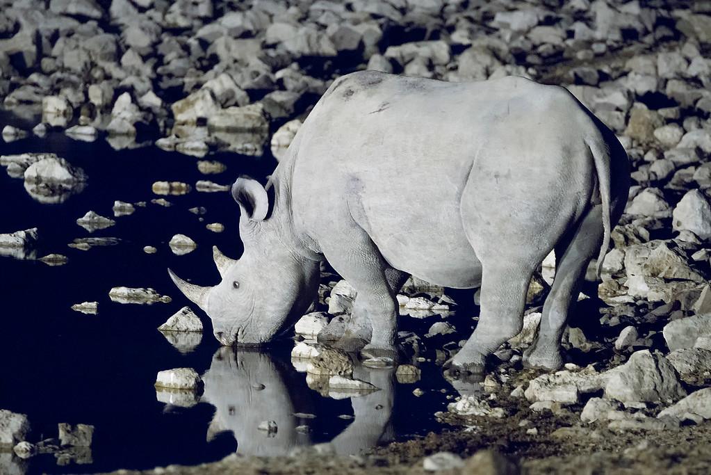 Rhino by Night