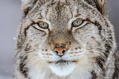 Thinking Predator