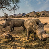 Black Rhino's and Warthogs
