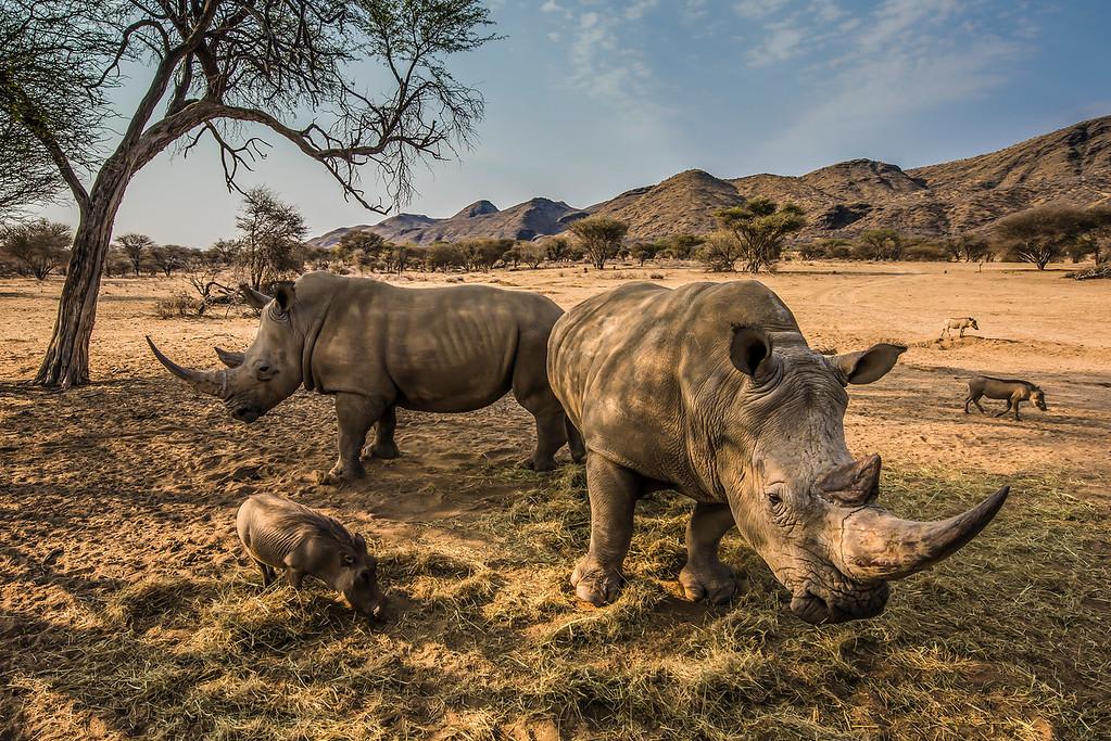 Black Rhino's and Warthogs