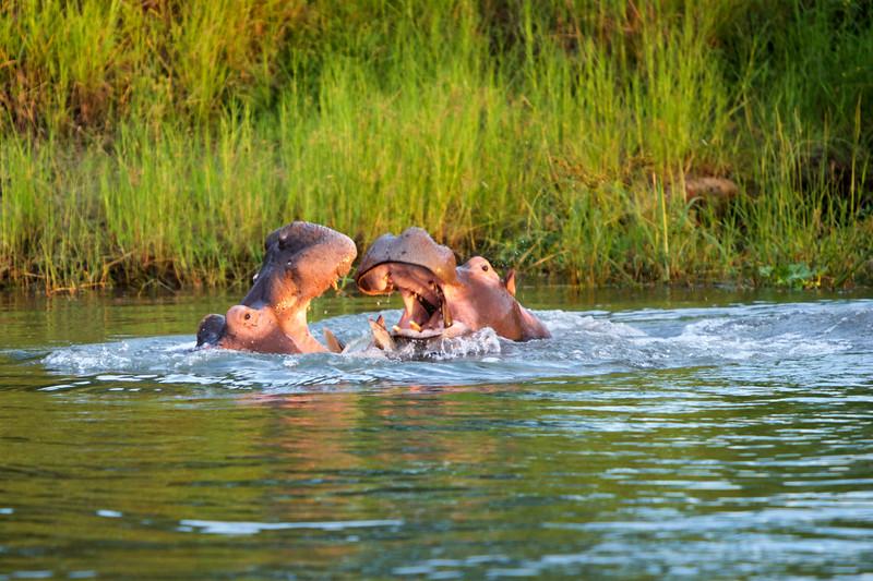 Africa.Ian,Jillian,Friends,Wildlife