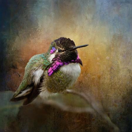 Hummingbird Digital Art