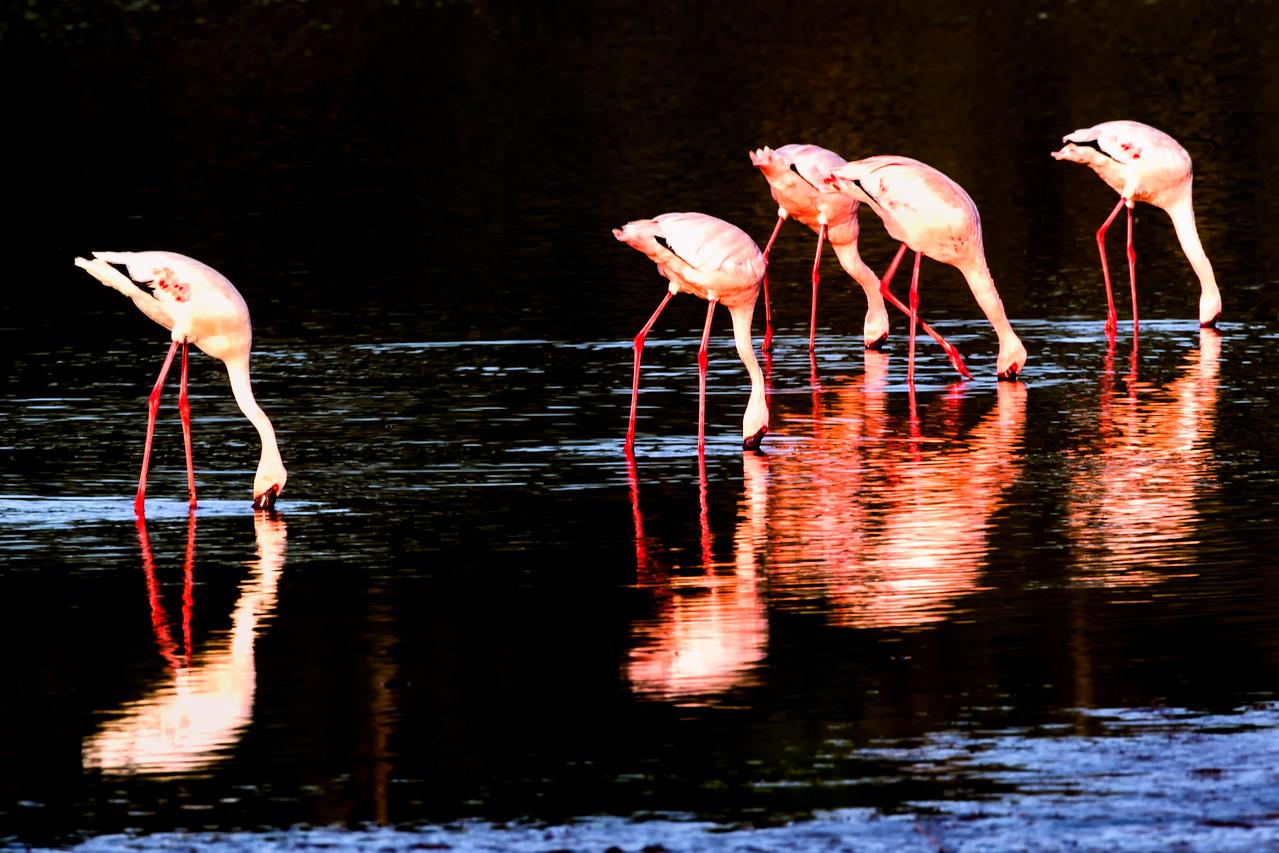 Flamingo reflections - Serengeti