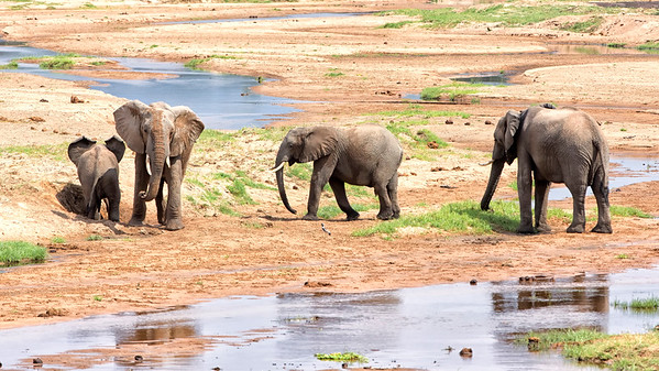 Elephants on the Ruaha river