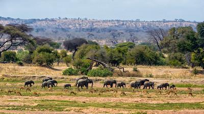 Ruaha Elephants