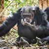 Bonobo hand inspection