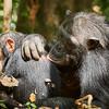 grooming offspring
