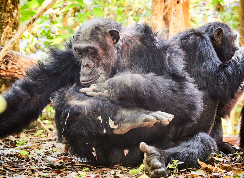 bonobo leg inspection