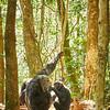 Bonobo?