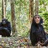Mother & Chimp??