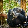 Bonobo foot inspection
