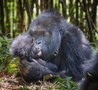Rwanda Gorilla Hirwa Group