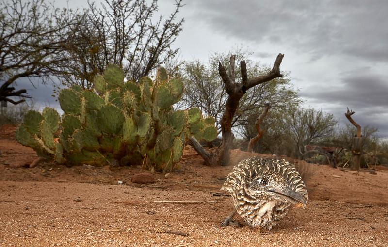 Arizona March 2017