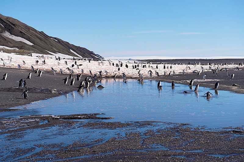 Chinstrap Penguins on the beach at Baily Head, a prominent headland forming the easternmost extremity of Deception Island