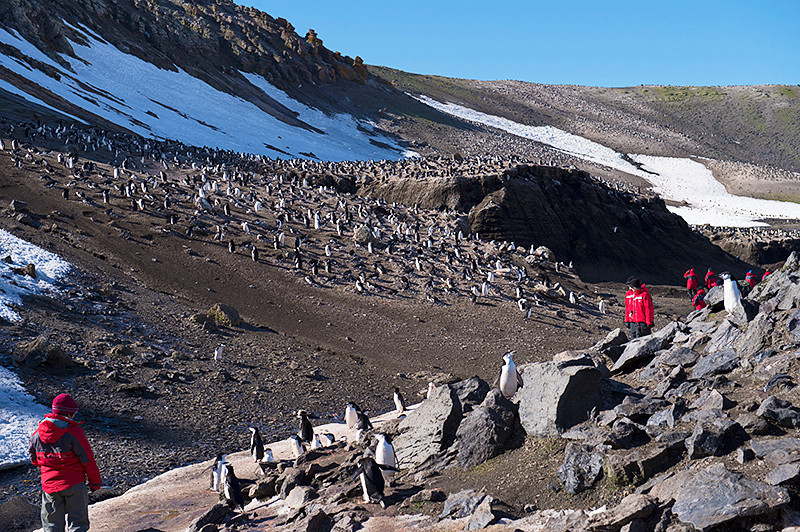 The main Chinstrap Penguin colony of more than 100,000 breeding pairs at Baily Head, a prominent headland forming the easternmost extremity of Deception Island
