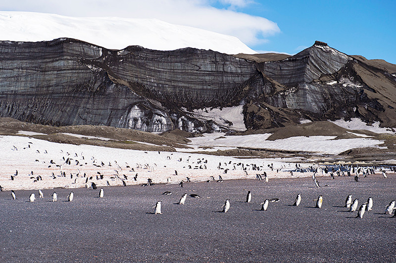 Chinstrap Penguins on the beach at Baily Head, a prominent headland forming the easternmost extremity of Deception Island. Note the Chinstraps in the foreground following each other to the Bellingshausen Sea.