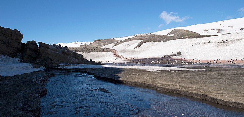 "Hiking in the entrance to the main part of the Chinstrap Penguin Colony at Baily Head, a prominent headland forming the easternmost extremity of Deception Island. Note the ""Penguin Highway"" in the image."