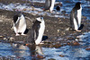 Chinstrap Penguins at Baily Head, a prominent headland forming the easternmost extremity of Deception Island