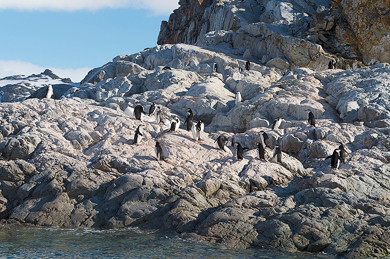 Chinstrap Penguin Rookery on the rocks at Cierva Cove, located at the far northern end of Hughes Bay, at the northern end of the Gerlache Strait