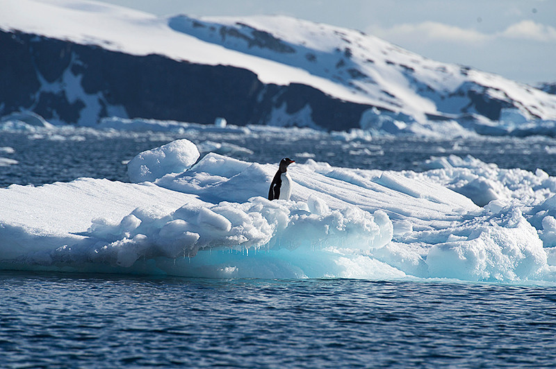 Gentoo Penguin on an iceberg at Cierva Cove, located at the far northern end of Hughes Bay, at the northern end of the Gerlache Strait
