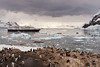 A colony of Gentoo Penguins looks on from the shore in their rookery at Neko Harbor, an inlet on the Antarctic Peninsula on Andvord Bay, situated on the west coast of Graham Land while the Silver Explorer remains anchored in the harbor, and a zodiak filled with passengers returns to the ship.