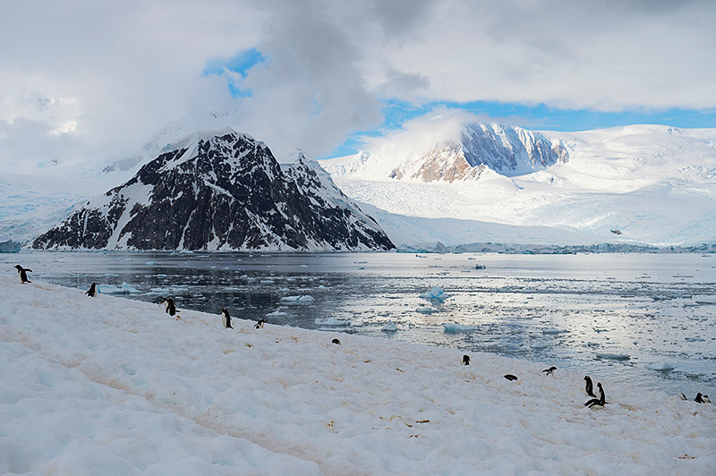 Gentoo Penguins in the foreground at Neko Harbor, an inlet on the Antarctic Peninsula on Andvord Bay, situated on the west coast of Graham Land.