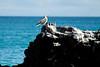 Galapagos Trip - Galapagos, Bachas Beach, Santa Cruz Island<br /> Blue Footed Booby