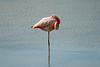 Galapagos Trip - Galapagos, Bachas Beach, Santa Cruz Island<br /> Flamingo