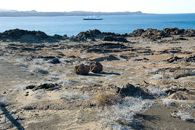Galapagos Trip - Galapagos, Bartolome Island<br /> Gray Matplant