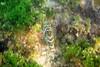 Galapagos Trip - Galapagos, Cerro Dragon, Santa Cruz Island<br /> Cabrilla
