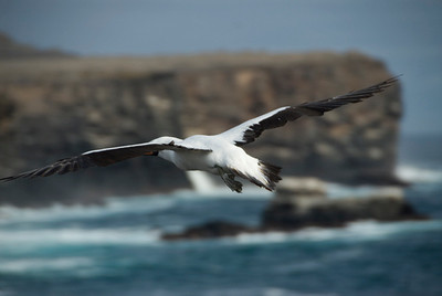 Galapagos Trip - Galapagos, Espanola Island