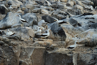 Galapagos Trip - Galapagos, Espanola Island<br /> Nazca Booby Colony
