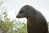Galapagos Trip - Galapagos, Espanola Island<br /> Sea Lion