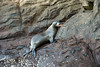Galapagos Trip - Galapagos, Kicker Rock<br /> Sea Lion returned from fishing trip