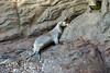 Galapagos Trip - Galapagos, Kicker Rock<br /> Sea Lion returned from fishing trip