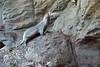Galapagos Trip - Galapagos, Kicker Rock<br /> Sea Lion eating fish