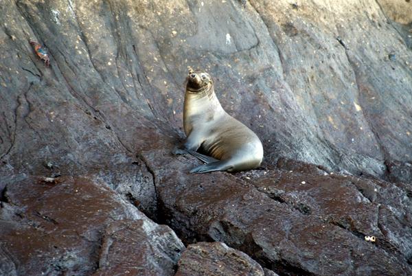 Galapagos Trip - Galapagos, Kicker Rock<br /> Sea Lion