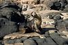 Galapagos Trip - Galapagos, North Seymour Island<br /> Sea Lion