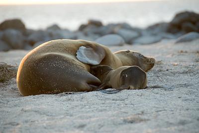 Galapagos Trip - Galapagos, North Seymour Island<br /> Sea Lions