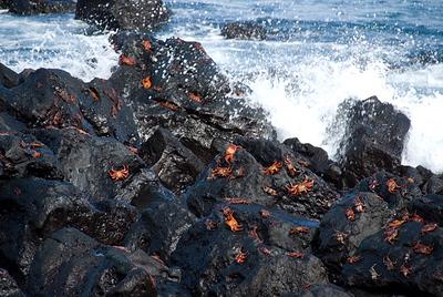 Galapagos Trip - Galapagos, San Cristobal Island, Puerto Baquerizo Moreno<br /> Sally Lightfoot Crabs