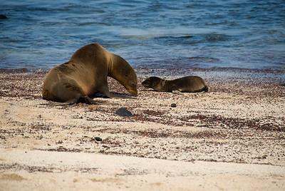 Galapagos Trip - Galapagos, San Cristobal Island, Puerto Baquerizo Moreno<br /> Sea Lions